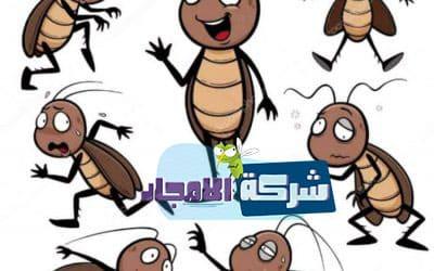 حشرات بالرياض