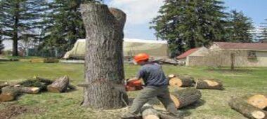 شركة قص اشجار بالرياض