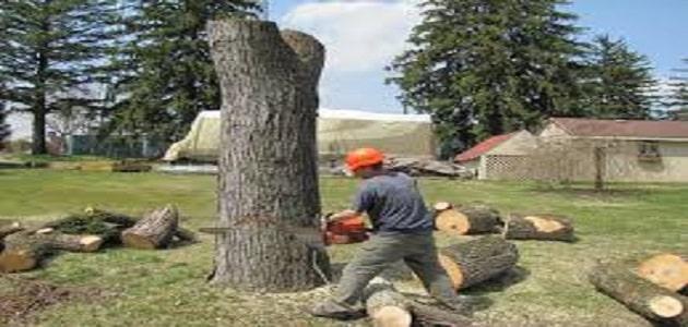 قص اشجار بالرياض